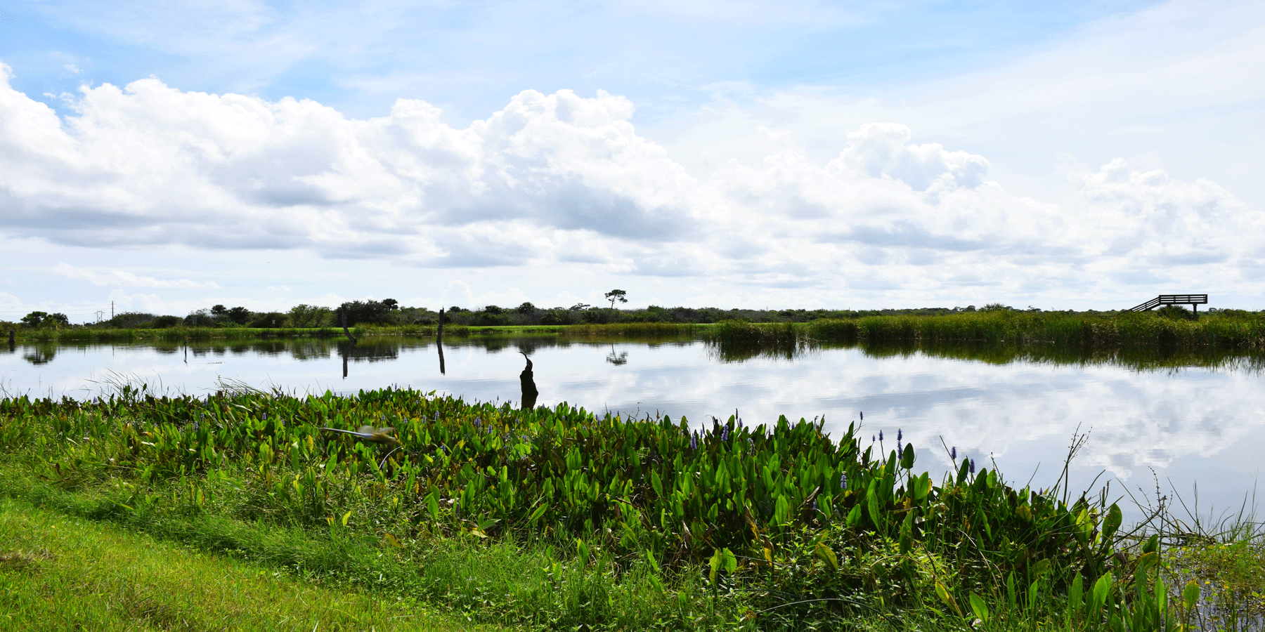 Viera Wetlands Pond with Blue sky and Clouds